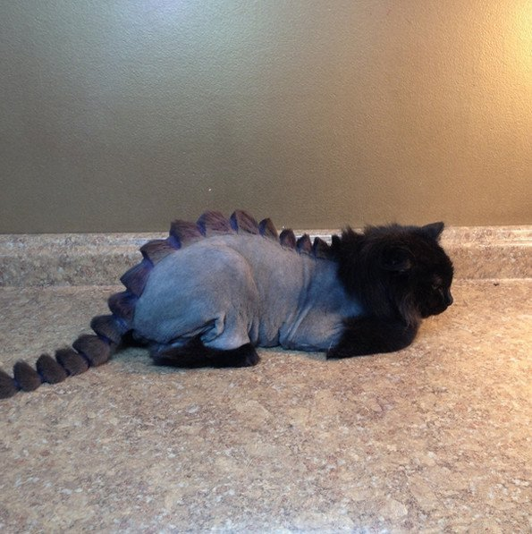 Cat with Funny Odd Haircut
